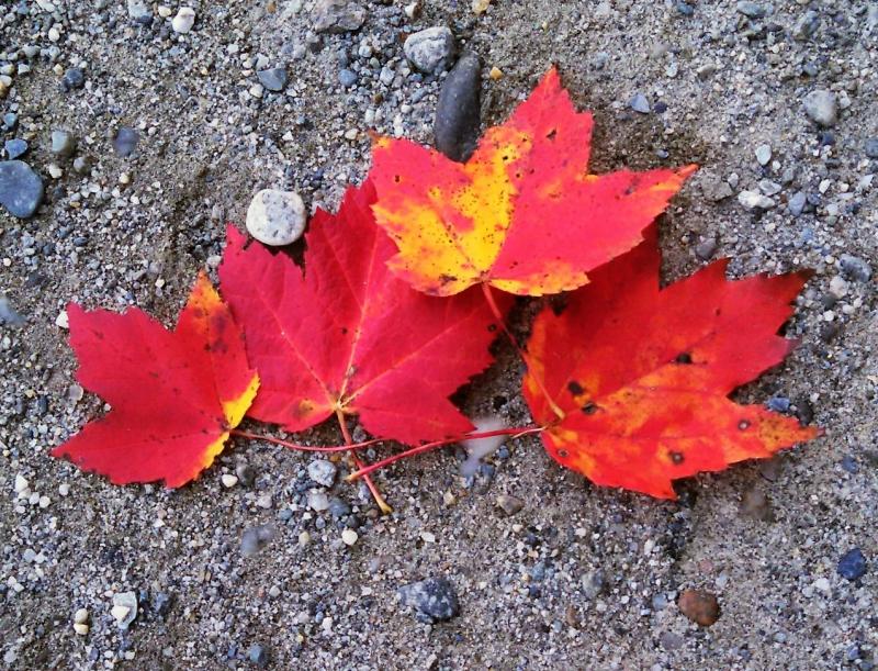 Vermont leaves 2016