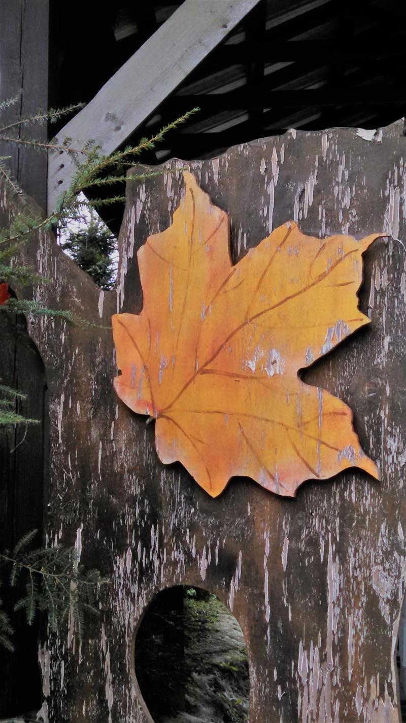 Yellow leaf 2017